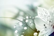 lv_17_flowers.jpg