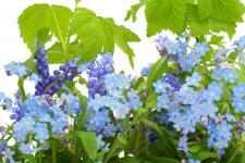 lv_21_flowers.jpg