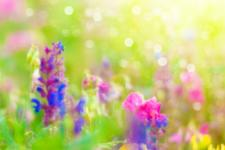 lv_22_flowers.jpg