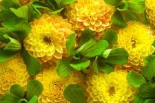 lv_23_flowers.jpg