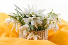 lv_24_flowers.jpg