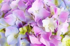 lv_4_flowers.jpg