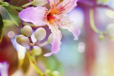 lv_8_flowers.jpg