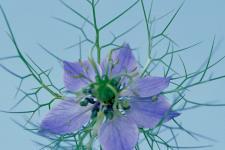 lv_flowers_008.jpg