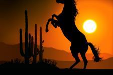 dp_horse_silhouette_a.jpg