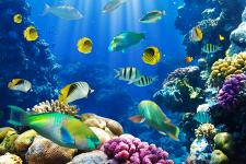 sea_animals_30.jpg