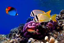 sea_animals_32.jpg