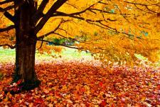 lv_autumn_1.jpg